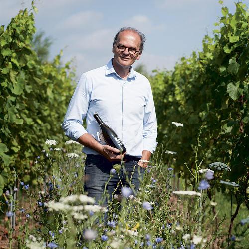 Wijngaard Het Verhaal LZ