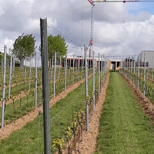 Wijngoed D'Hellekapelle