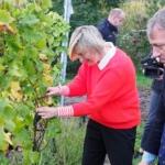 Crevits steunt wijnbouw 2