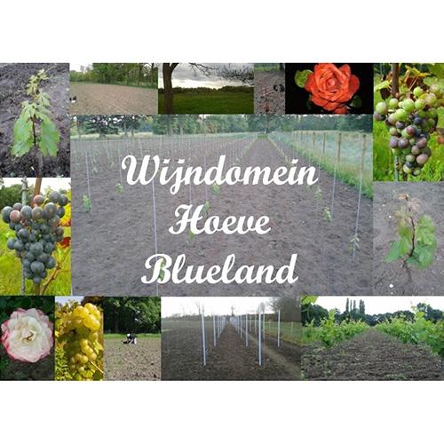 Wijndomein Hoeve Blueland